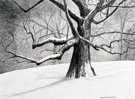 The Old Tree Drawing By Bob Crawford