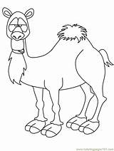 Camel Coloring Pages Printable Template Crafts Animal Animals Kindergarten Preschool Templates Rebekah Bible Funny Camels Print Isaac Lots Children Students sketch template