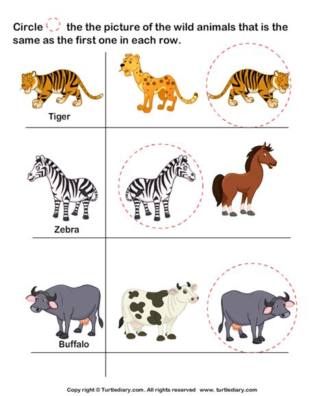 animals tiger worksheet turtle diary 458 | answer wild animals tiger