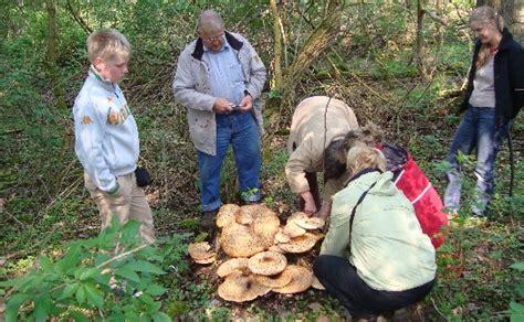 ratten im haus meldepflichtig essbare pilze waldpilze beliebte waldpilze essbare pilze