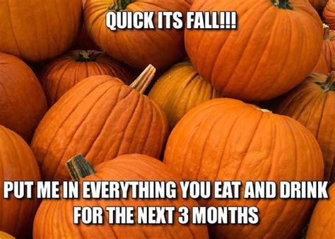 Fall Meme - fall s pumpkins have me quite excited gigi eats celebrities