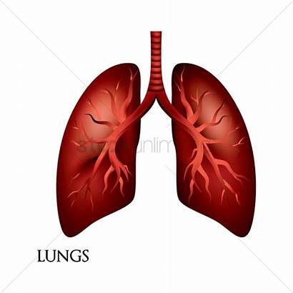 Lungs Stockunlimited Graphic Ai