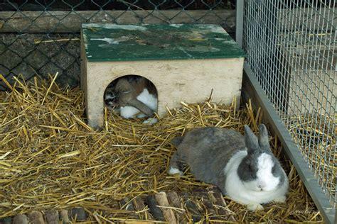 stall für kaninchen blasensteine beim kaninchen definition ursachen symptome tiermedizinportal