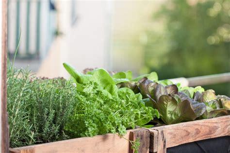 Lielais ģeogrāfiskā uztura princips un mazais dārziņš uz ...