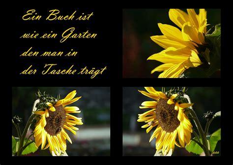 sonnenblume foto bild pflanzen pilze flechten