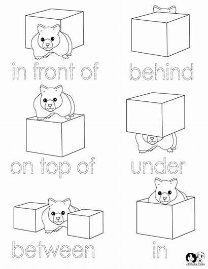 Words Kindergarten Positions Position Worksheets English Positional