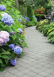Garden Ideas with Hydrangeas
