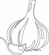 Garlic Coloring Pages Colouring Gourd Clove Bulb Template Print Pungent Flavor Vegetables Picolour sketch template