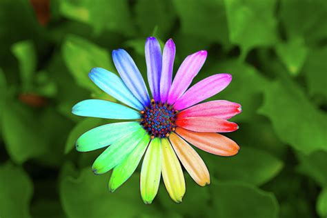 the picture of flower rainbow flower photograph by sean davey