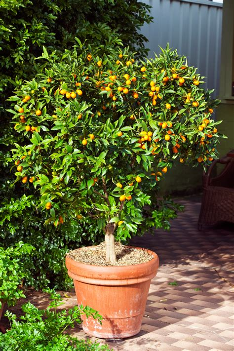 best potted plants for shade best pot plants for sun and shade burke s backyard