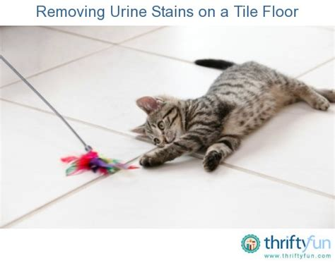 removing urine stains and smell from a tile floor thriftyfun