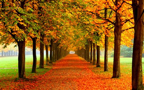 Colourful Autumn Wallpaper by 35 Best Free Wallpaper To The Wow Style
