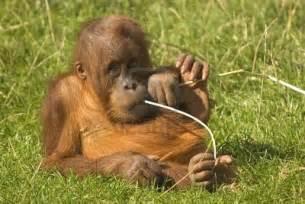 Cute Endangered Baby Animals