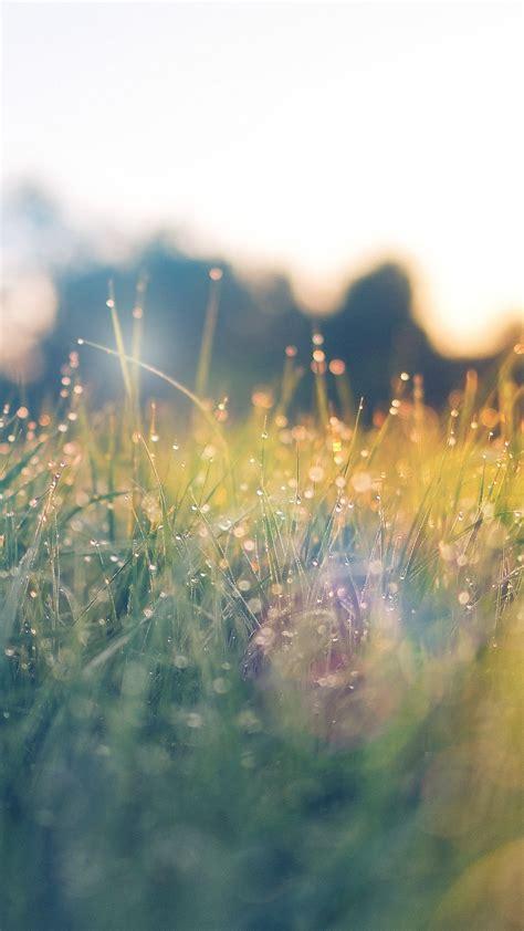 nm lawn green nature sunset light bokeh spring flare