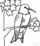 Hummingbird Coloring Pages Hummingbirds Printable Humming Cool2bkids Bird Print Adult Colors Getcoloringpages sketch template