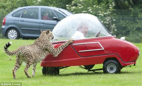 Longleat: The moment cheetahs tried to peel open a three ...