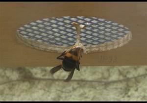 Nid De Guepe Dans Le Toit : frelon nid maison best n nid de frelons asiatiques peut mesurer mtre de diamtre et hberger une ~ Medecine-chirurgie-esthetiques.com Avis de Voitures