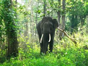 The Nilgiri Biosphere Reserve Nature Park of South India