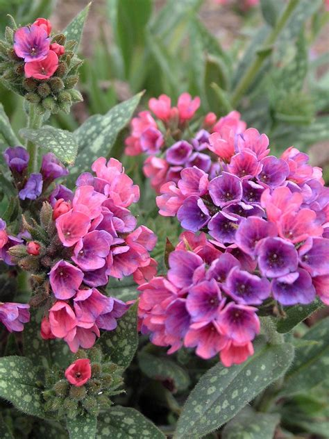 shade annuals favorite spring blooming perennials hgtv