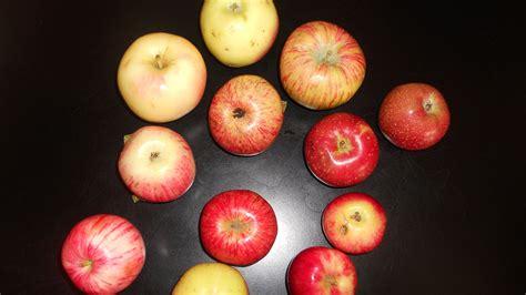 The Comeback Of The Endangered Colorado Orange, An Apple ...