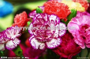 hybrid f1 carnation seeds for sale buy carnation seeds