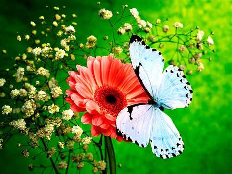 Fondos Mariposas Related Keywords  Fondos Mariposas Long