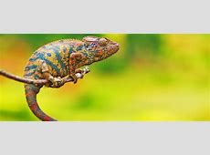 Going Chameleon What a New Material that Changes Color as