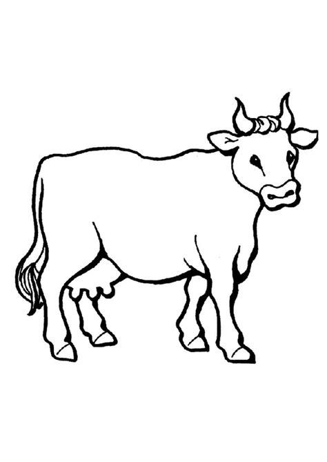 Kleurplaat Koe Zonder Vlekken by Pictures To Colour Cows