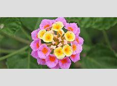 Heat Tolerant Plants for Texas ABC Blog