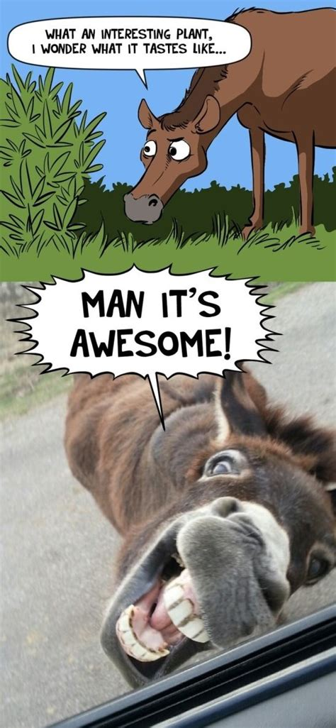 Donkey Memes - best joke 2014 donkey business