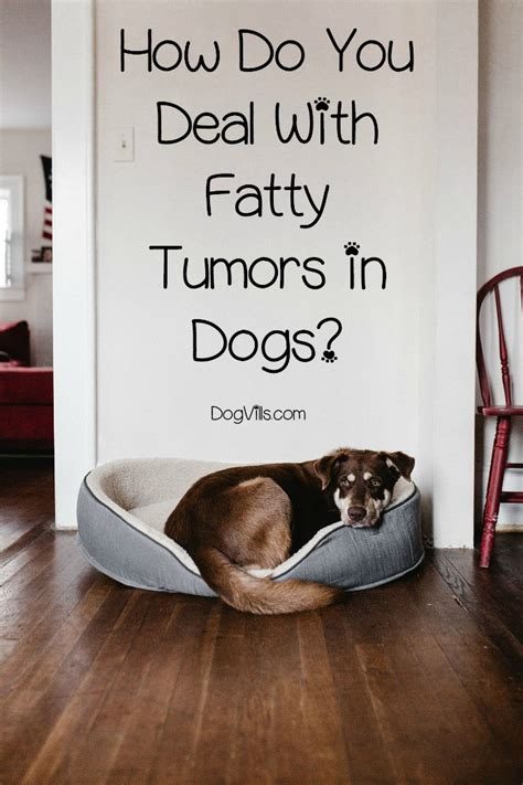 fatty tumors  dogs    treated dogvills