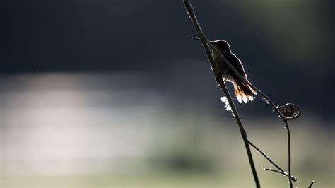Wie Oft Sticht Eine Mücke Pro Nacht by Rasante Sturzpiloten Kolibris Und Ihre Wilden Luftman 246 Ver
