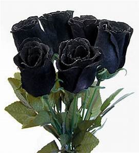 Black Roses | Asma With Friends