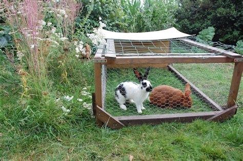 elevage de poules pondeuses lapins domestiques et autres volailles