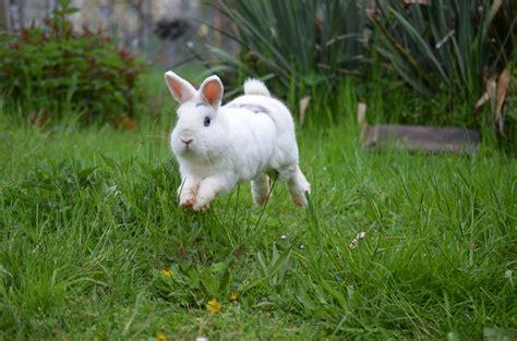 buddelkisten fuer kaninchen haltung pflege verhalten