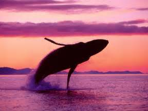 Image result for ballena