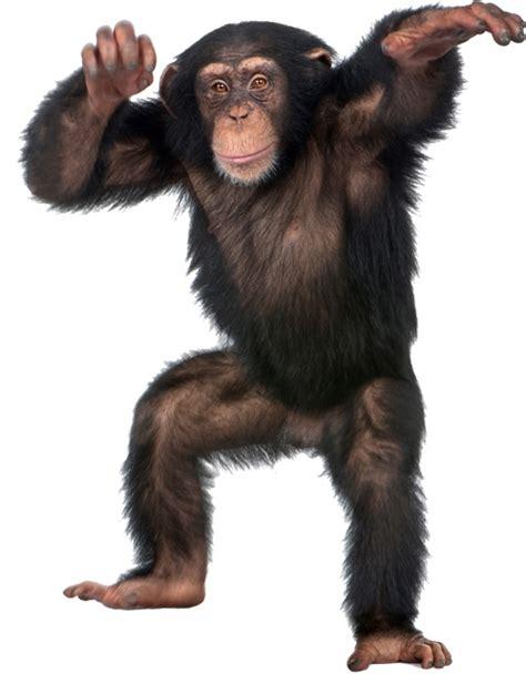 wsd dancing monkey animal removable wall sticker