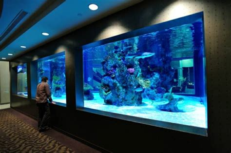 acrylic aquariums aquatic exhibits commercial