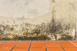 Remontée Capillaire Mur : prix d un traitement de remont e capillaire ~ Premium-room.com Idées de Décoration