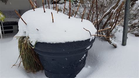 Topfpflanzen Giessen Und Richtig Pflegen by Pflanzen Im Lauen Winter Rasen Topfpflanzen Und Co