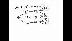 Using Branch Diagrams