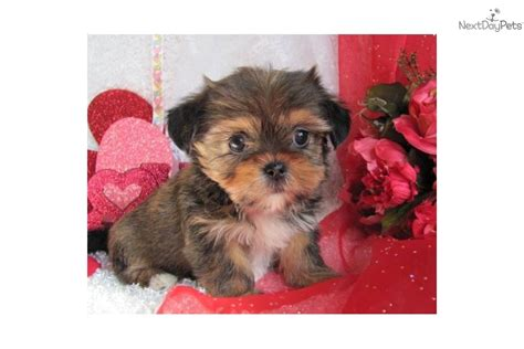 Non Shedding Small Dogs Mixed Breeds by Non Shedding Small Dogs Mixed Breeds Breeds Picture