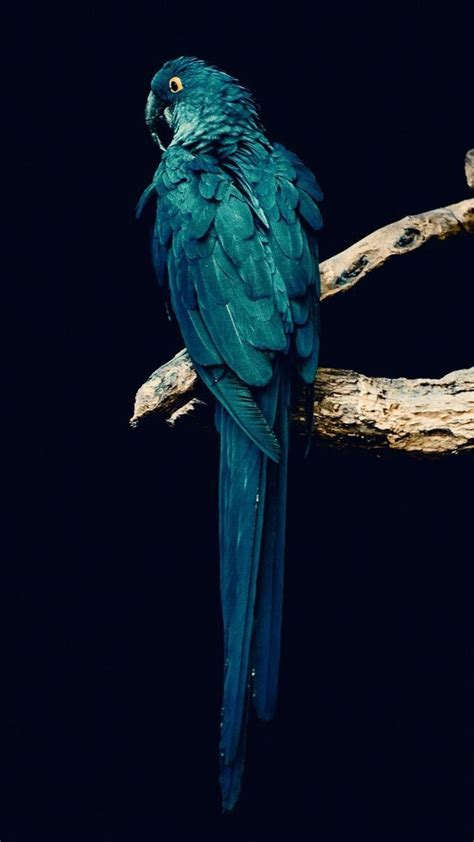 Animal Wallpaper For Iphone - animals wallpaper iphone animals birds wallpapers iphone