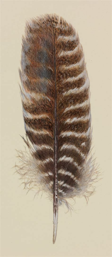 turkey feather feathers artwork by jerrie yehling