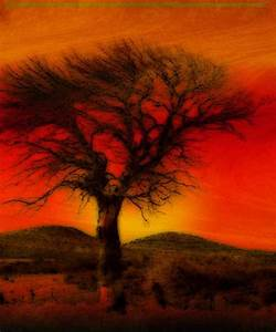 """Oil Pastel Tree in Sunset"" by Winona Sharp 