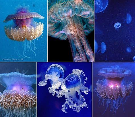 Medusas.. | Doğa fotoğrafları, Fotoğraf