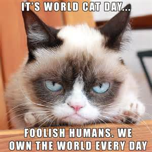 world cat for its world cat day