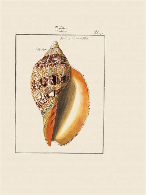images  natural histories  pinterest