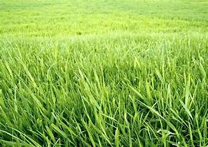 Green grass background. The wallpaper | Stock Photo ...