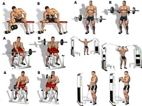 bicep workout program arm workouts biceps workout gym